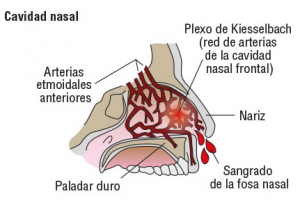 anatomia-nariz-sangrado